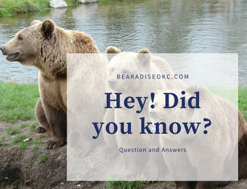 Q&A – What Events Can I Expect to See at Bearadise 2020